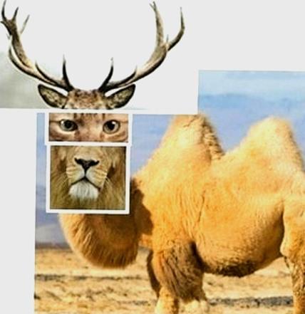 la leggenda del cammello