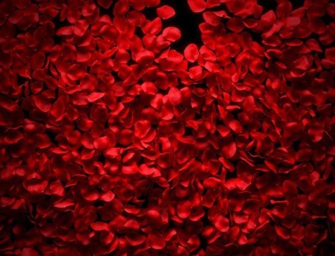petali di rose